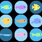 熱帯魚を長生きさせる本当に重要な4つのポイントを解説!