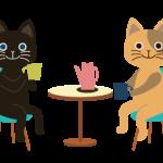 猫カフェ初心者が猫にモテるまでの一連の流れを解説します!